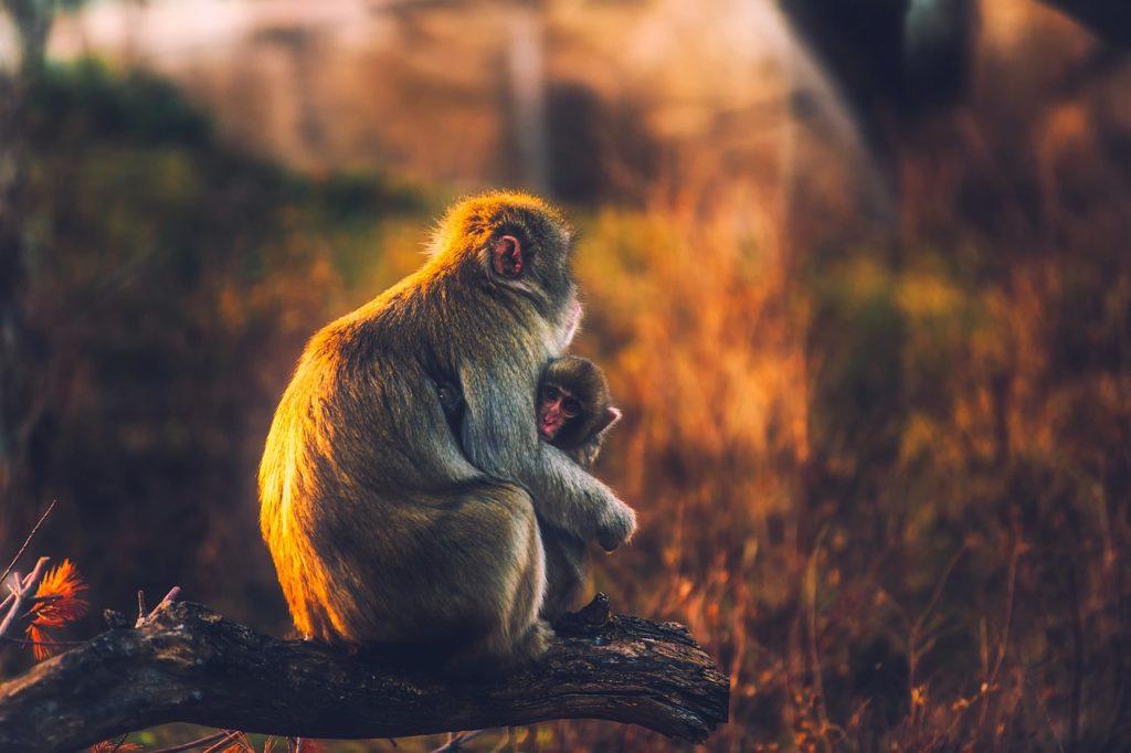 Το παιδί θέλει τη μάνα του όσο η μάνα το παιδί